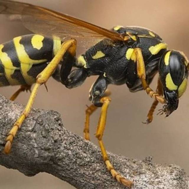 Перша допомога при укусі бджоли дитині: 4 ступеня тяжкості, 10 рекомендацій лікаря