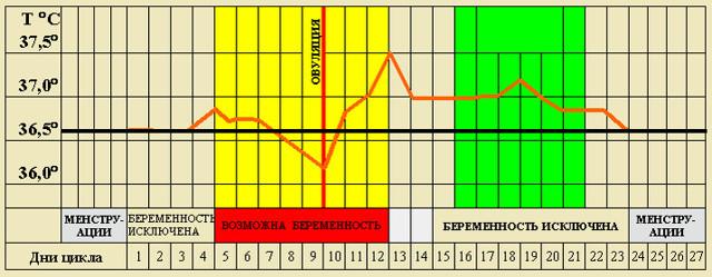 Особливості менструального циклу і його взаємозв'язок з вагітністю