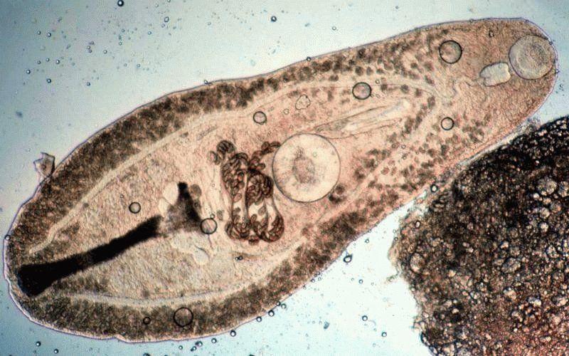 Бактерія в збільшена вигляді